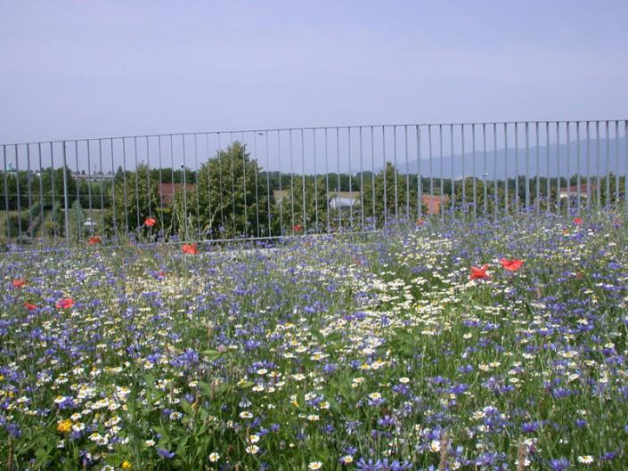 Tetti verdi e giardini pensili il giardino di de pra snc for Giardini terrazzati immagini