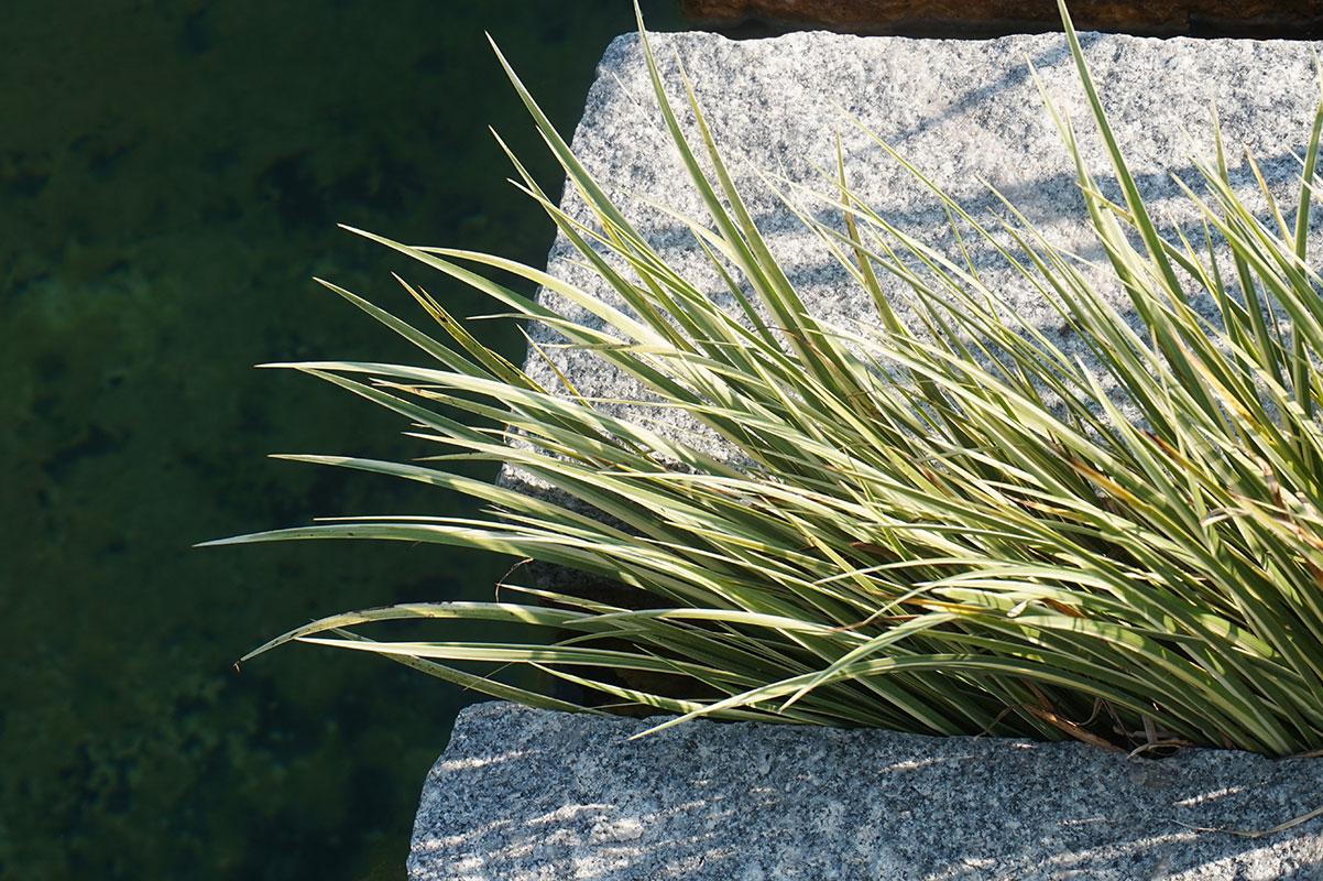 Natural pools tecnica il giardino di de pra snc for Laghetto balneabile progetto